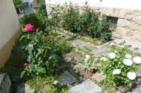 Garten-in-Coburg,-Danziger-Str.-2-akt.-am-26.05.jpg