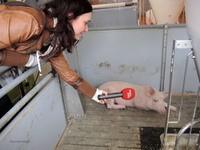 160412Schweine02.jpg