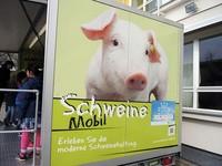 160412Schweine08.jpg