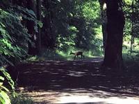 Lutherweg_Tag1_17.jpg